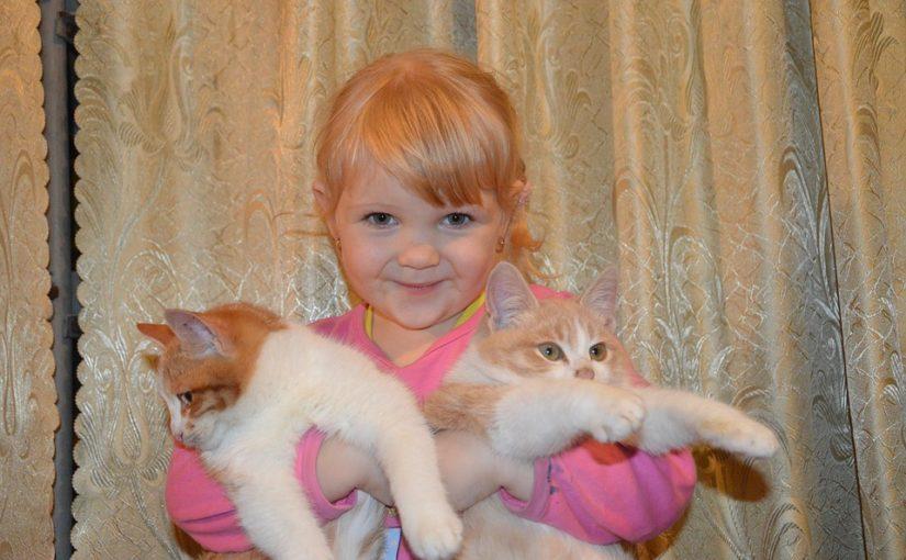 El mejor gato para niños